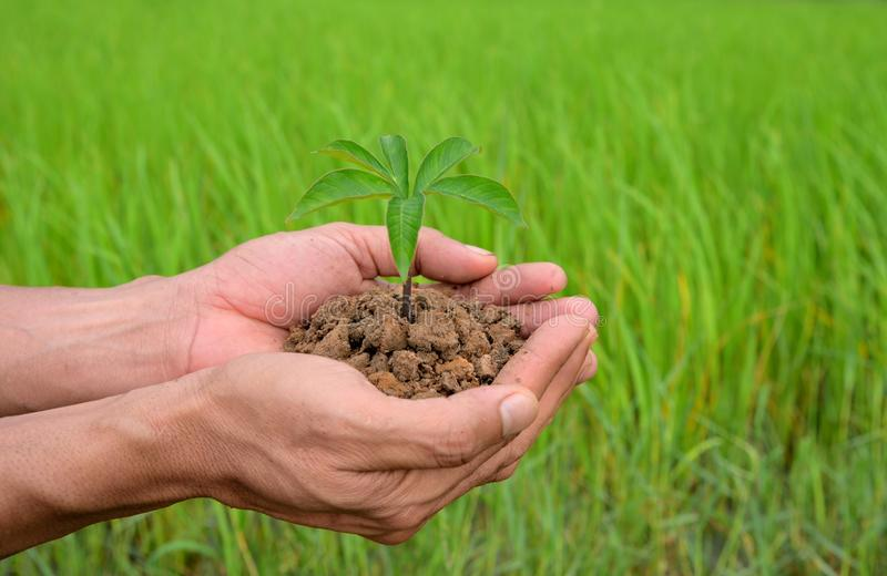 Plants agriculture. Growing plants. Plants seedling. Hands nurturing and watering young baby plants growing in germination on fert stock image