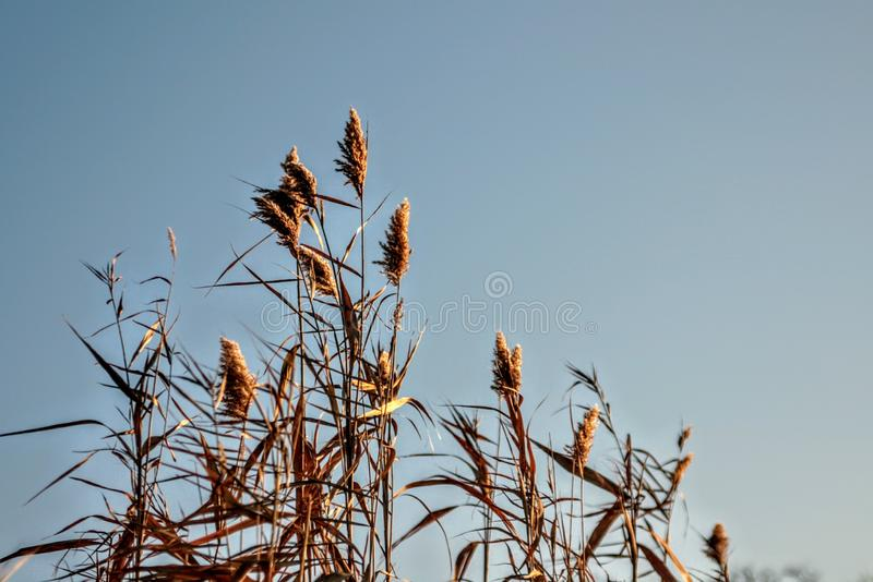 plants autumn sky nature blue yellow royalty free stock photo
