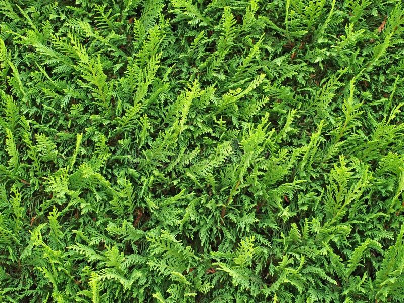 Plants background stock image
