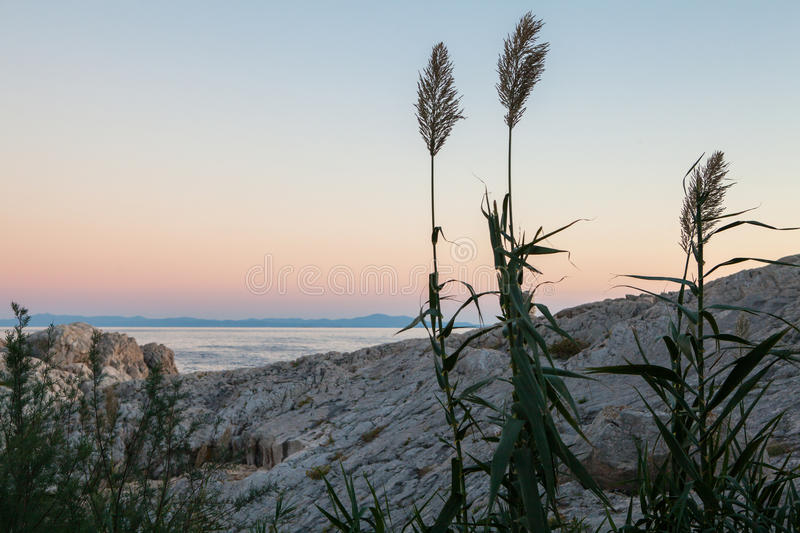 Plants on the background of the sea. Beautiful seascape, plants on the background of the sea royalty free stock photo