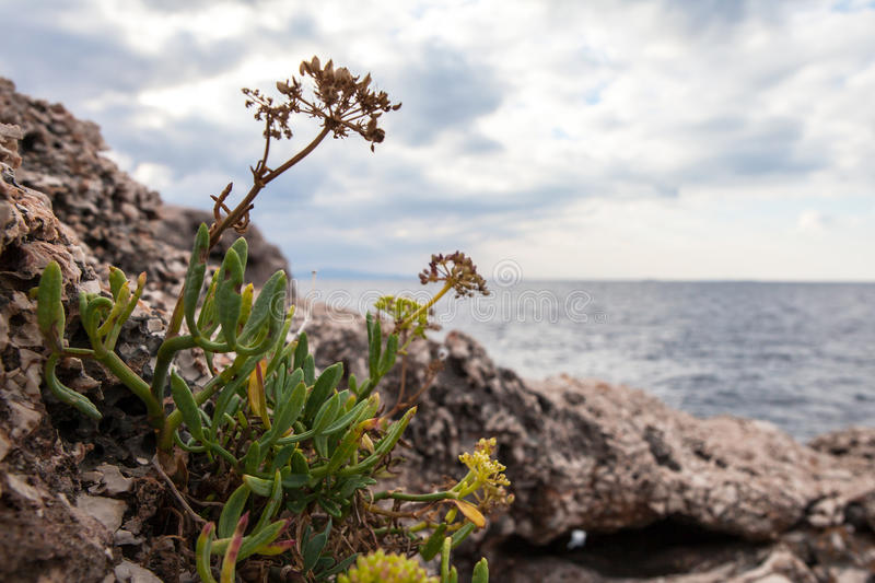Plants on the background of the sea. Flowers, seascape stock images