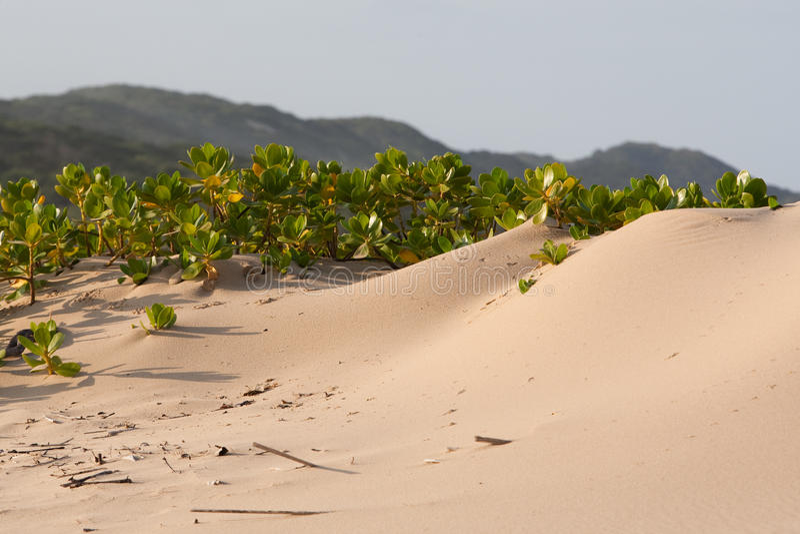Plants on the beach