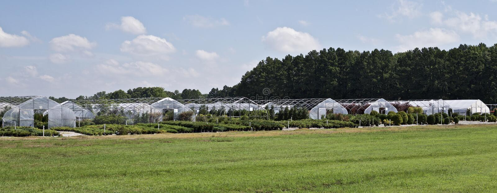 Plants being grow and sold at a Nursery. Commercial crops of various types of plants being readied sale at a Nursery stock image