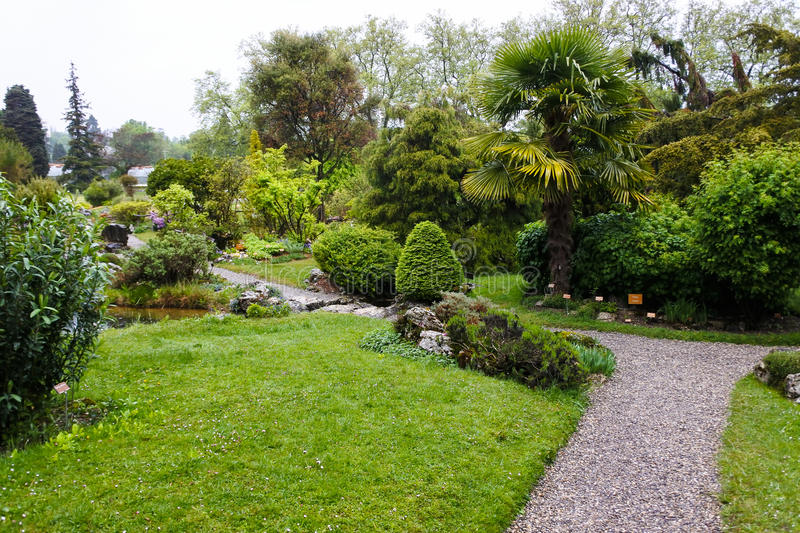 Plants in a Botanical Garden in Geneva. April 2017. Switzerland. Picturesque place stock images