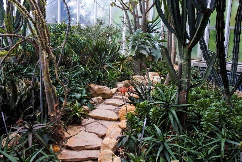 Plants in a Botanical Garden in Geneva stock photography
