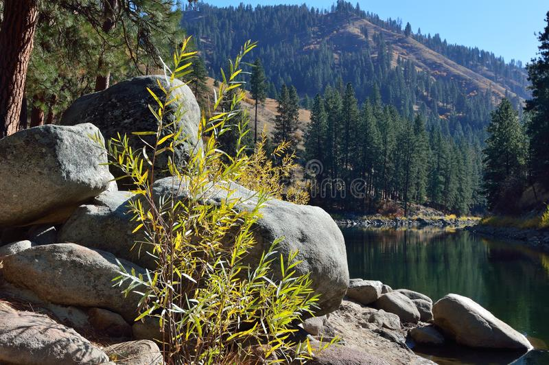 Plants, Boulders, Payette River, Pine Trees, Shore, Reflections, Idaho royalty free stock photography