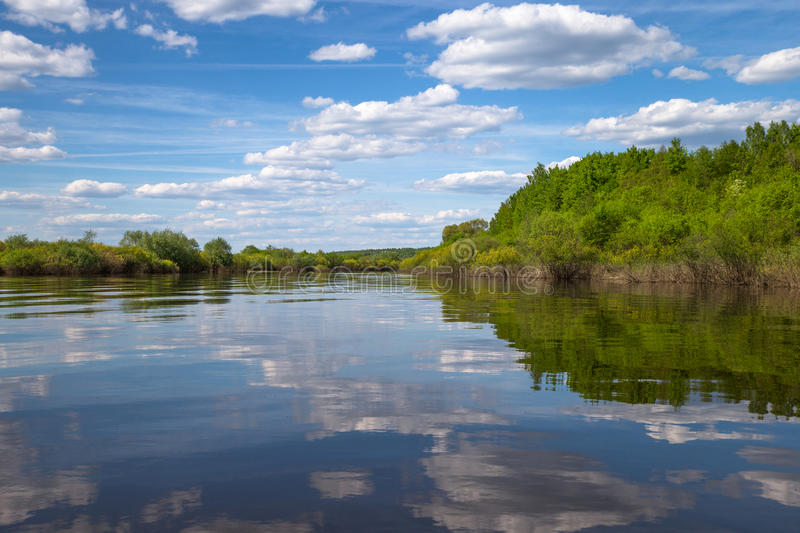 Plants and bushes growing along the banks of River. Plants and bushes growing along the banks of the River, Russia stock photo
