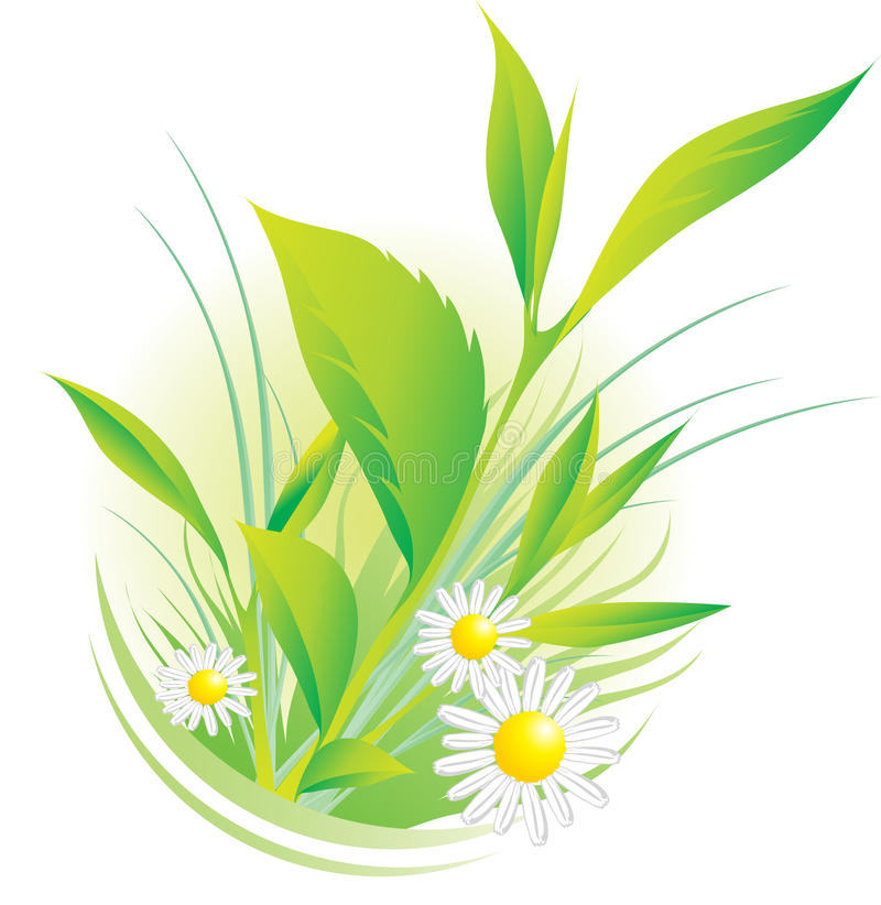 Plants and chamomile. Vector illustration of natural plants and chamomile