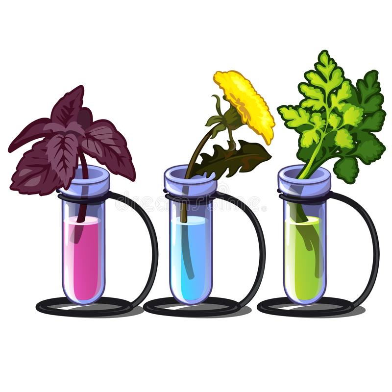 Plants in chemical tubes with different liquid. Incubator for storing herbs. Basil, flower and parsley. Vector vector illustration