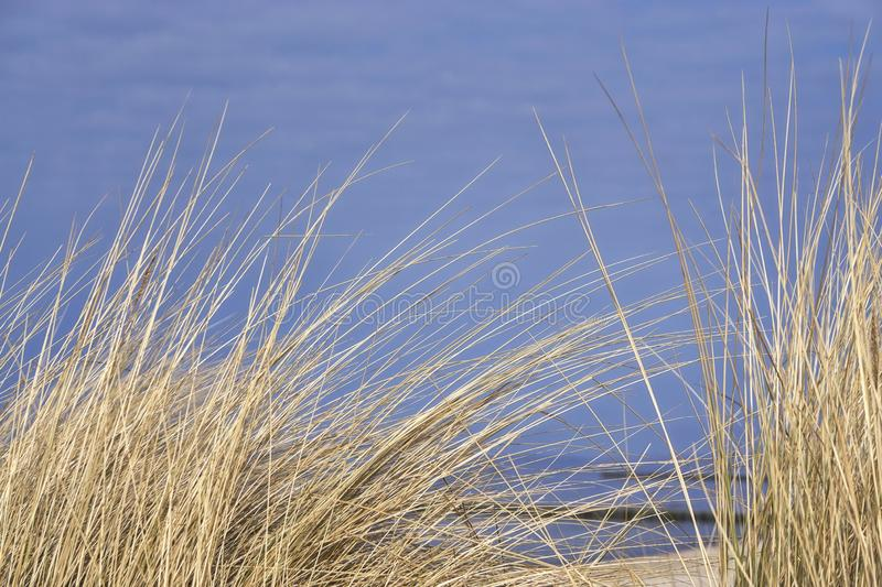 Plants on the Coast of the Baltic Sea, Mecklenburg-Vorpommern, Germany. Grass, beach, blue, nature, sand, sky, summer, travel, water, dune, beachgrass royalty free stock image