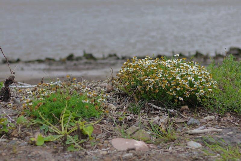 Plants on the coast royalty free stock photo