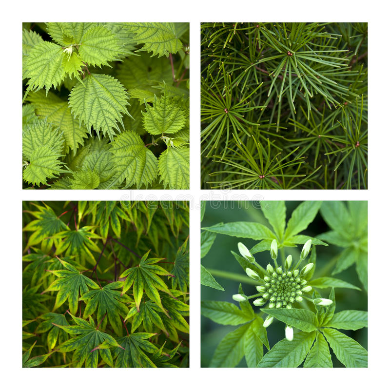 Plants collage royalty free stock image