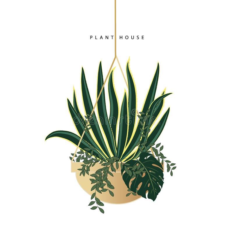 Plants in concrete pots vector illustration
