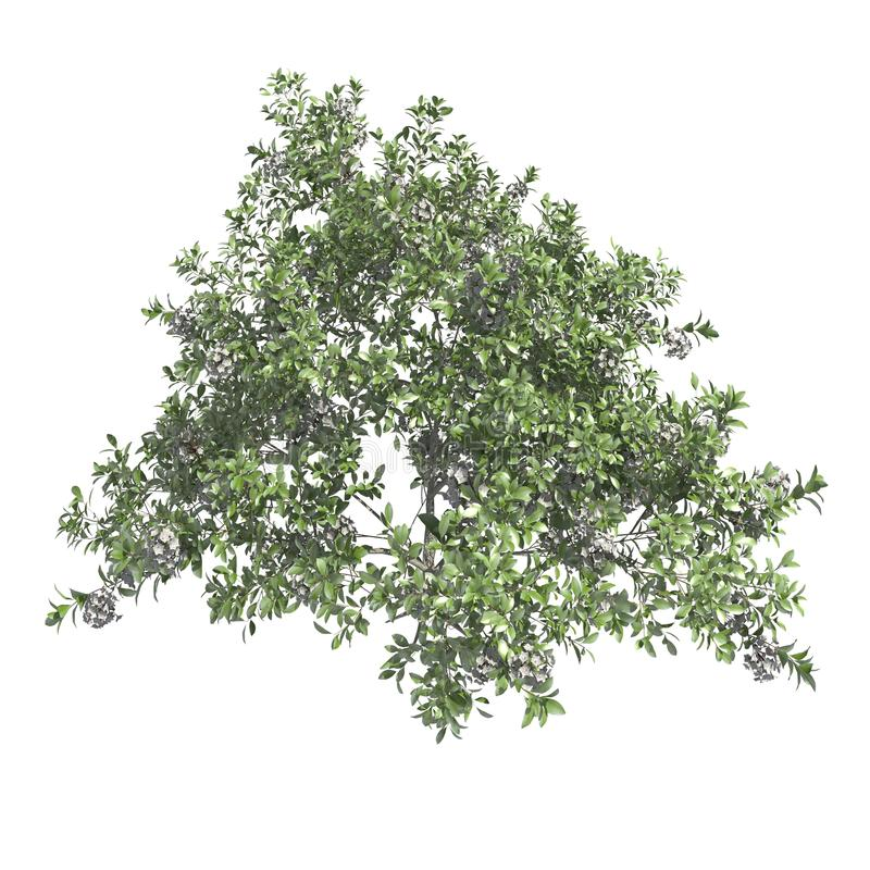 Plants 3d illustration isolated on the white background. Garden plants 3d illustration isolated on the white background royalty free stock photography