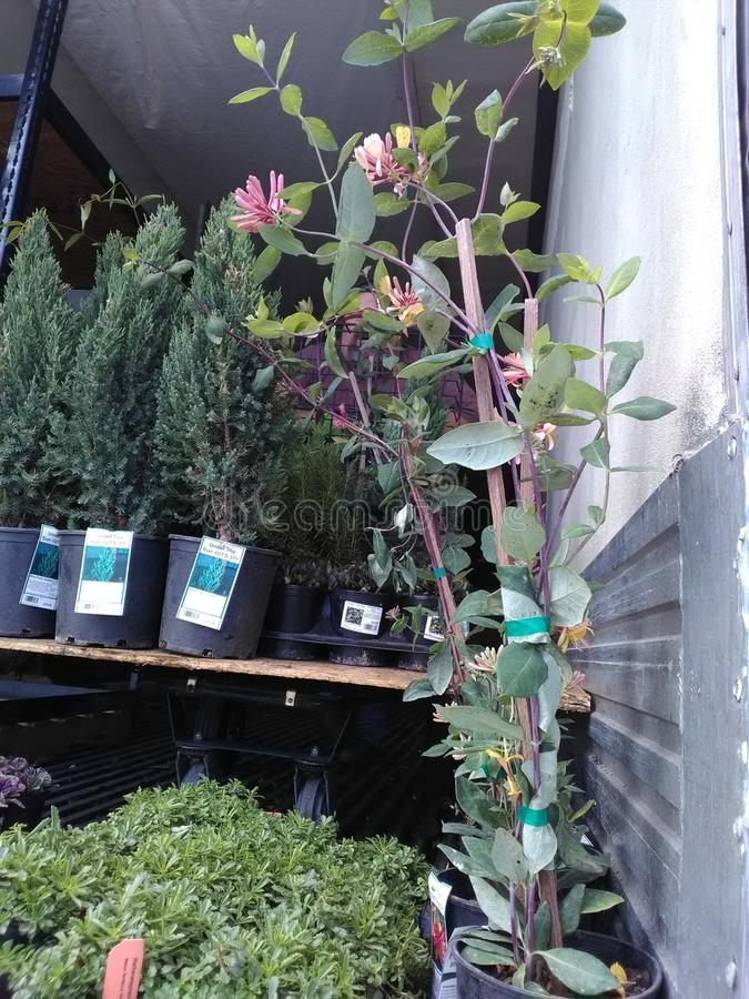 Plants delivery today stock photography