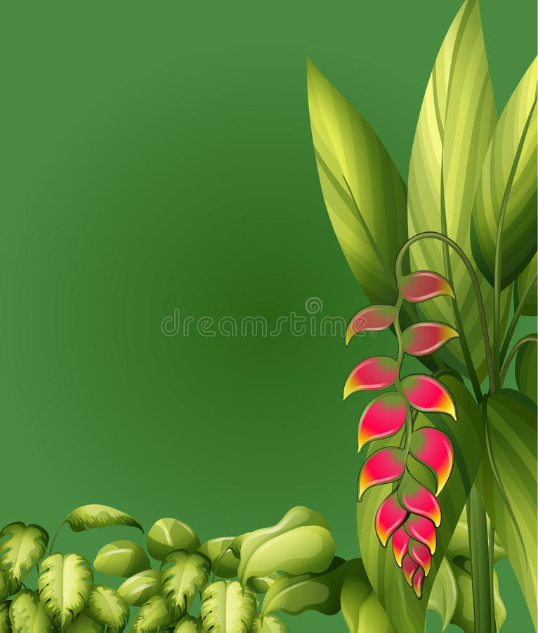 Plants with elliptic leaves. Illustration of plants with elliptic leaves on a green background vector illustration