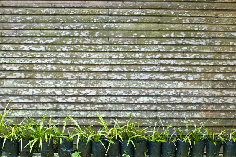 Download Plants and fence stock photo. Image of leaves, white - 10242346