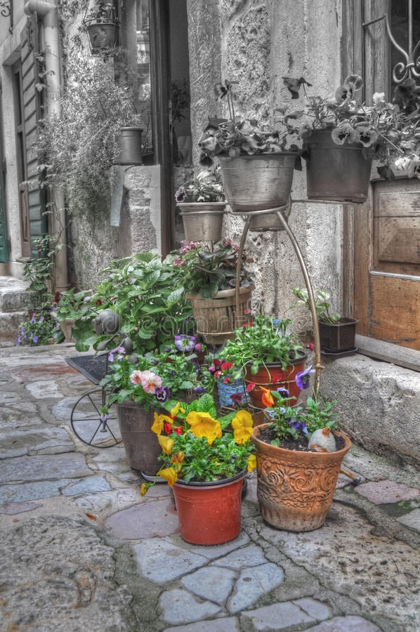 Download Plants and flowers stock image. Image of croatia, town - 25123173