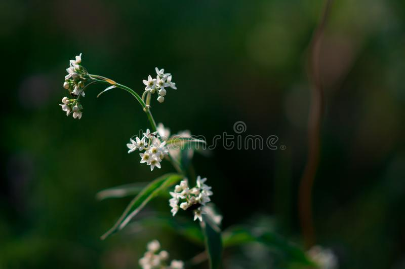 Plants and flowers in a forest glade royalty free stock photography