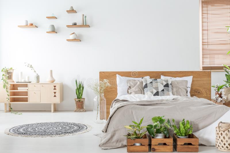 Plants in front of wooden bed in white bedroom interior with rug near cupboard. Real photo stock photography