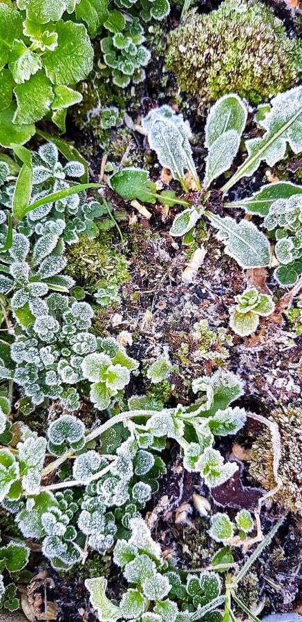 Plants frozen in a winters garden stock photography