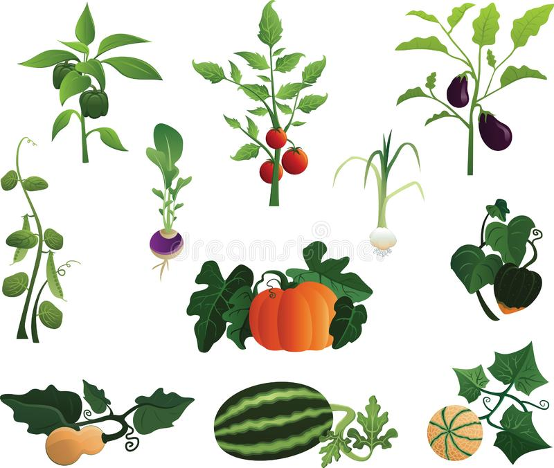 Plants from the Garden. Fruit and vegetable plants that grow in the garden in the field of agriculture vector illustration