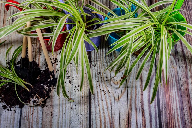 Plants and Gardening tools. Gardening tools dominate the background of wooden boards with copy space around the products. Border with place for text. Gardening royalty free stock image
