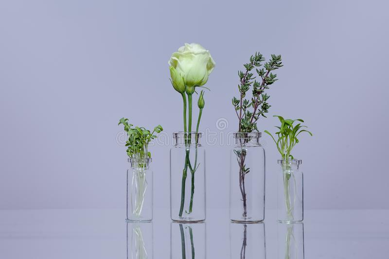 Plants in glass stock image