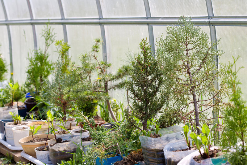 Plants In The Glasshouse Royalty Free Stock Photo
