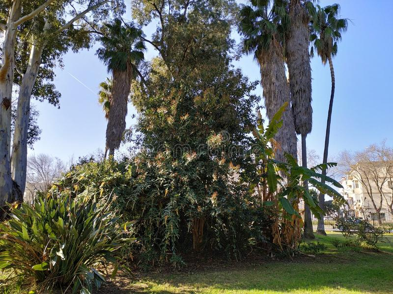 Plants grass trees in the zoo of Ayamonte province of Huelva Spain. Beautiful landscape in the zoo of Ayamonte province of Huelva Spain stock photos