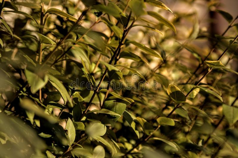 plants green garden nature plant bush royalty free stock photos