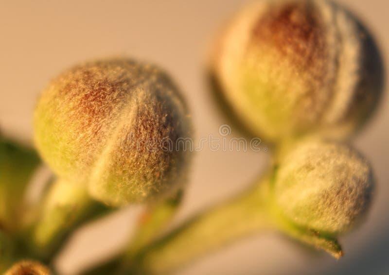 Plants green royalty free stock photos
