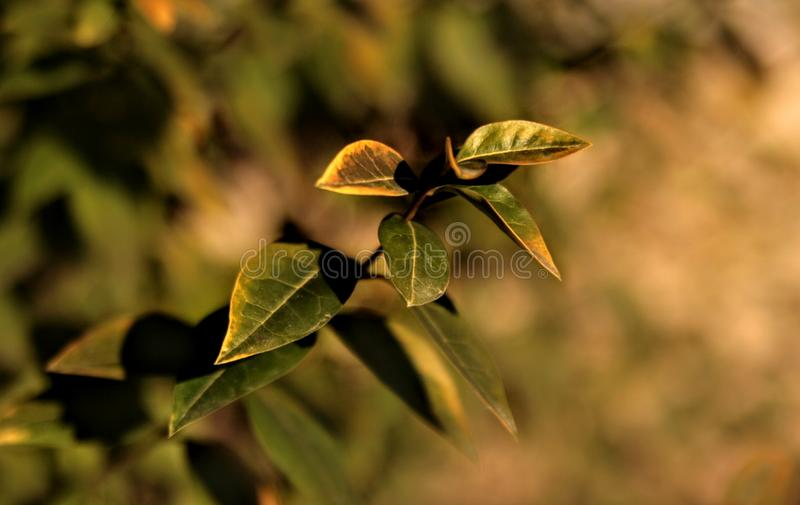 plants green nature grass yellow autumn stock photos