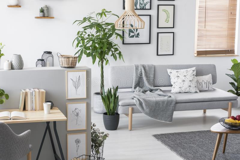 Plants in a grey living room interior with a sofa, art collection and desk. Real photo. Concept royalty free stock image