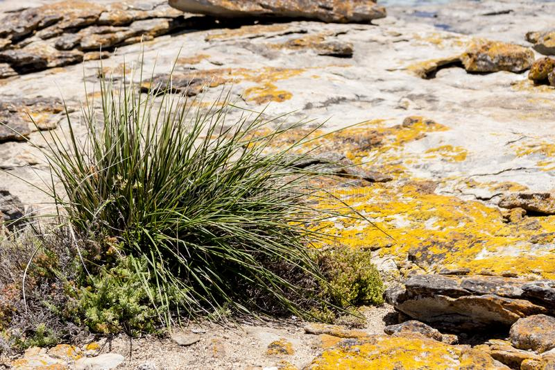 Plants grow on scanty stony soil. Red center in the Australian desert, outback in Northern Territory, Australia.  stock photos