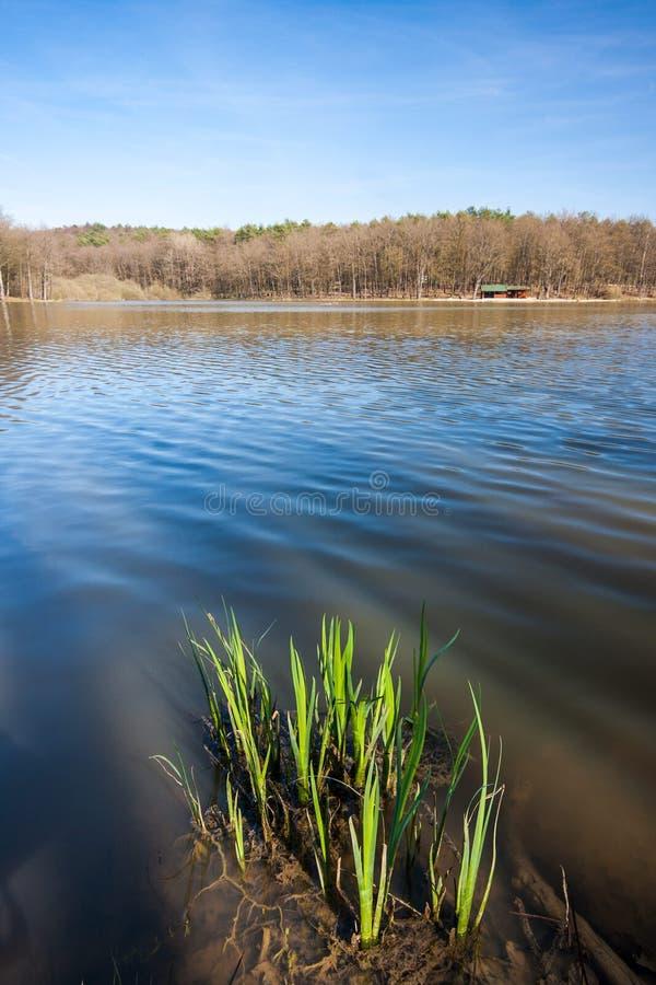 Plants growing in the Bukovnisko lake stock photography