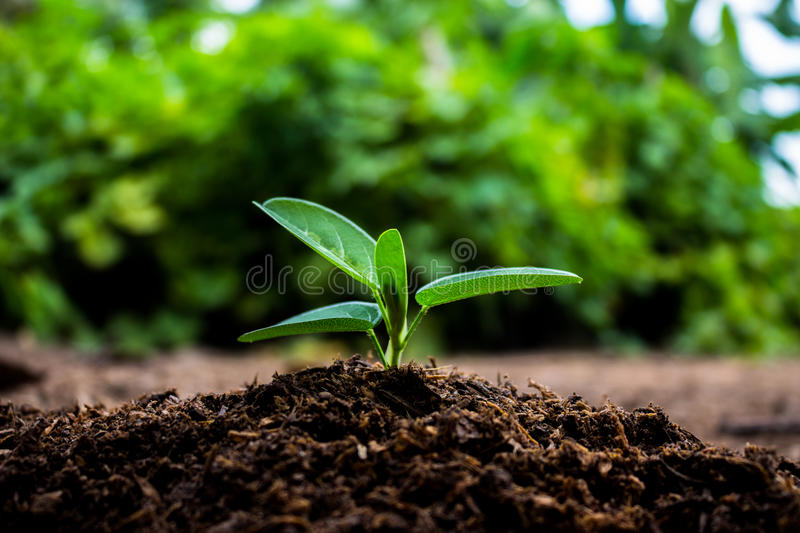 Plants growing in germination sequence on fertile soil with natural green background. royalty free stock photo