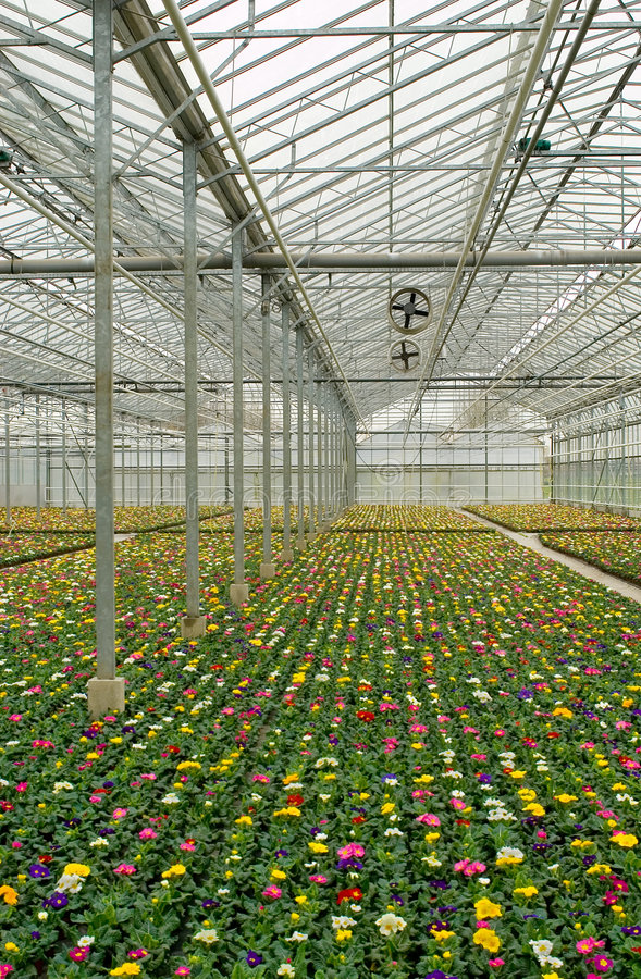 Download Plants Growing In Greenhouse Stock Photo - Image: 7097688