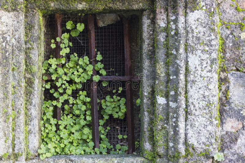 Download Plants Growing In A Old And Rusty Window. Stock Photo - Image: 83709625