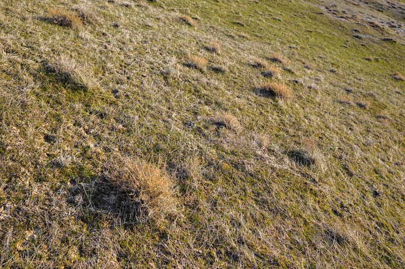 Plants growing on the slopes royalty free stock images