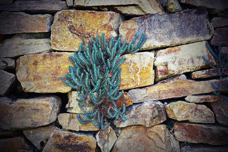 Plants growing on stone wall royalty free stock photos