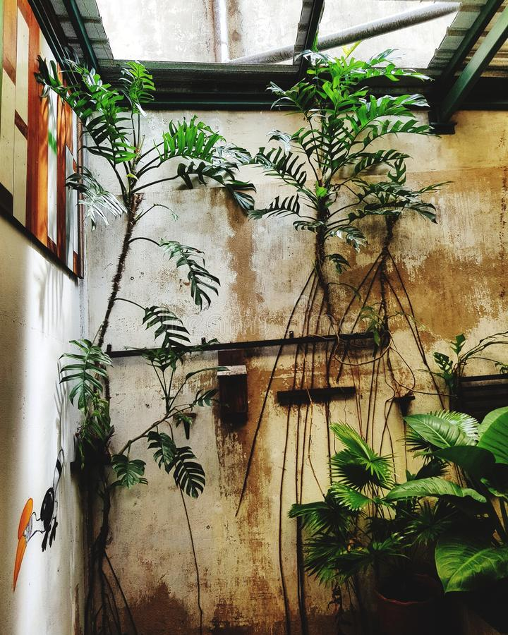 Plants growing on wall royalty free stock image