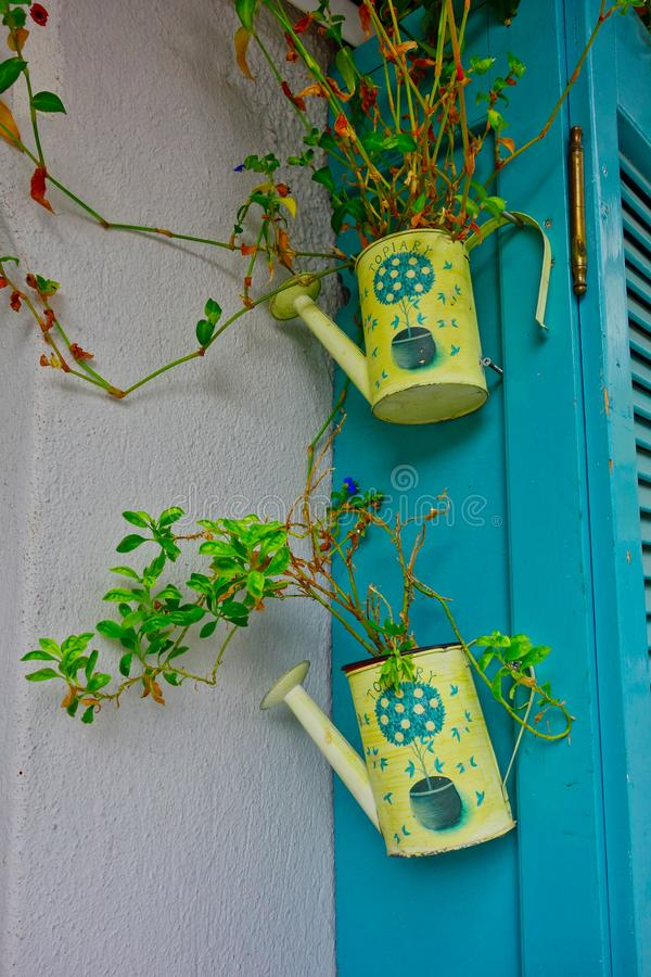 Plants Growing in Yellow Watering Cans, Greece royalty free stock image