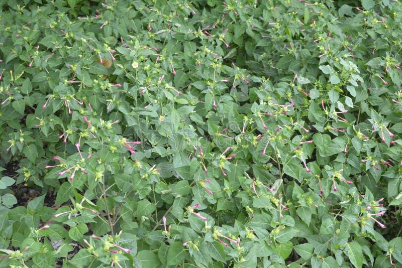 Plants grown in Tologan, Padada, Davao del Sur, Philippines royalty free stock photo