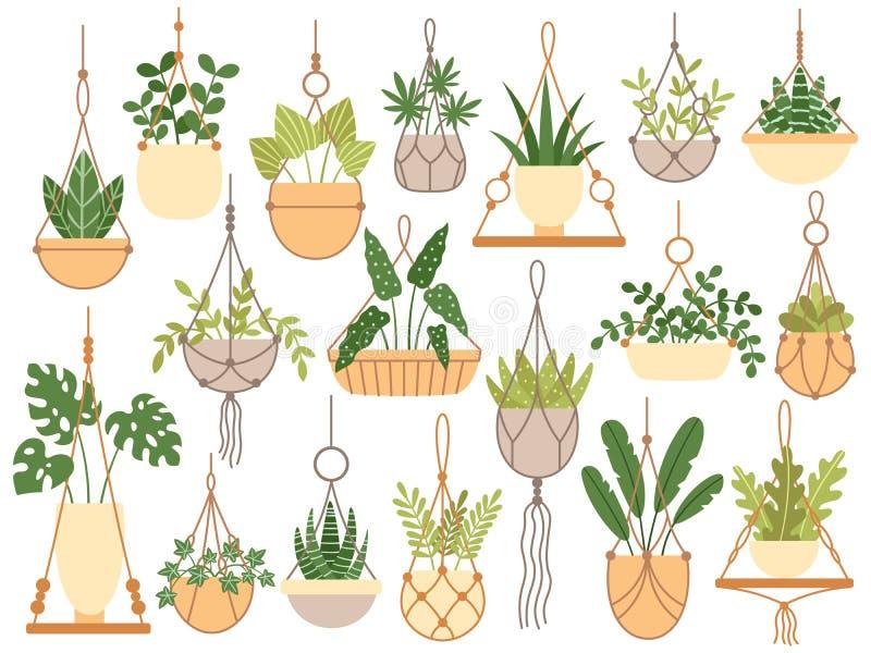 Plants in hanging pots. Decorative macrame handmade hangers for flower pot, hang indoor plants isolated vector set. Plants in hanging pots. Decorative macrame vector illustration