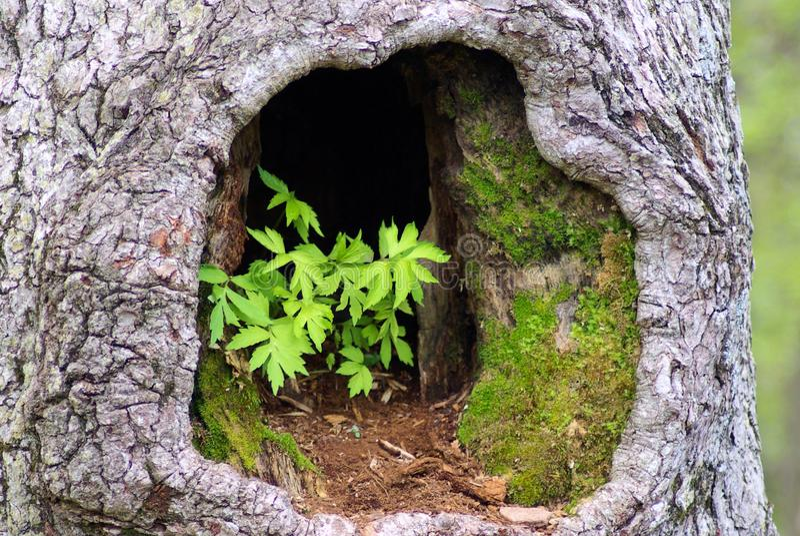 Plants in Hollow Tree stock photo