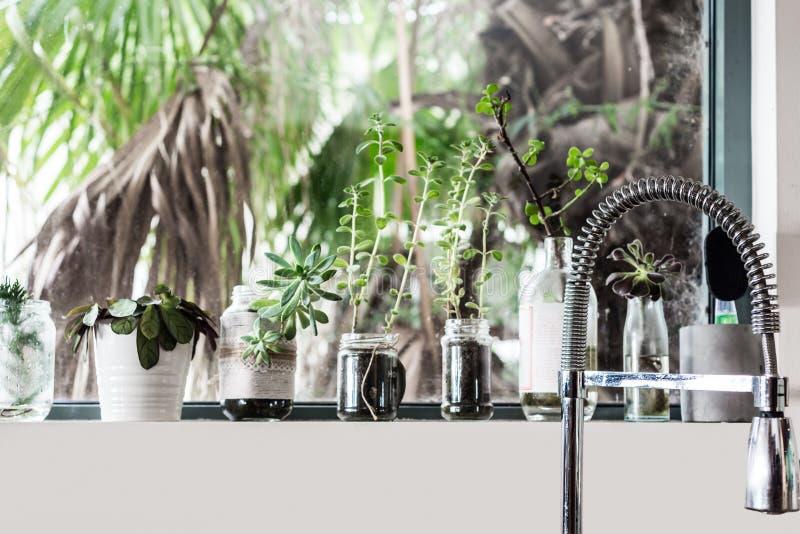 Plants on kitchen windowsill royalty free stock photos