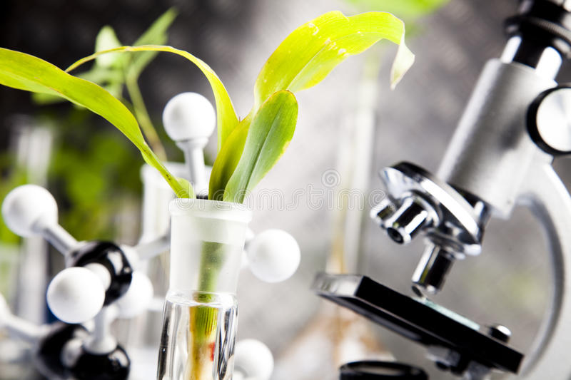 Plants and laboratory stock photo
