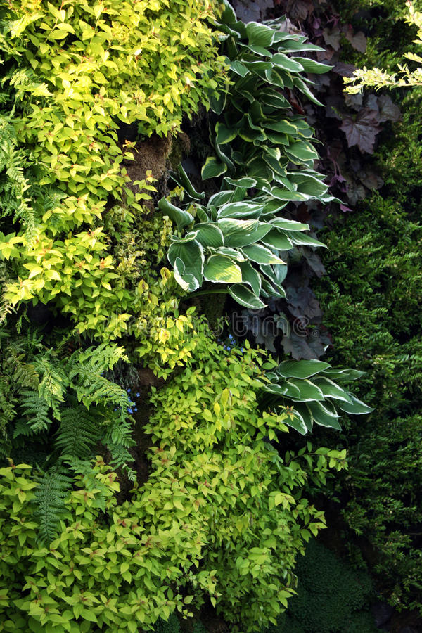 Plants for living walls royalty free stock images