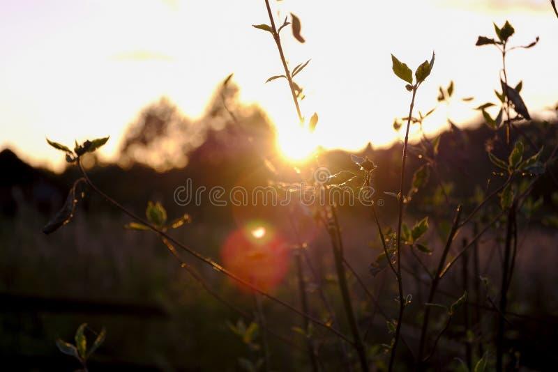 Plants in low evening light, romantic blurs royalty free stock photo